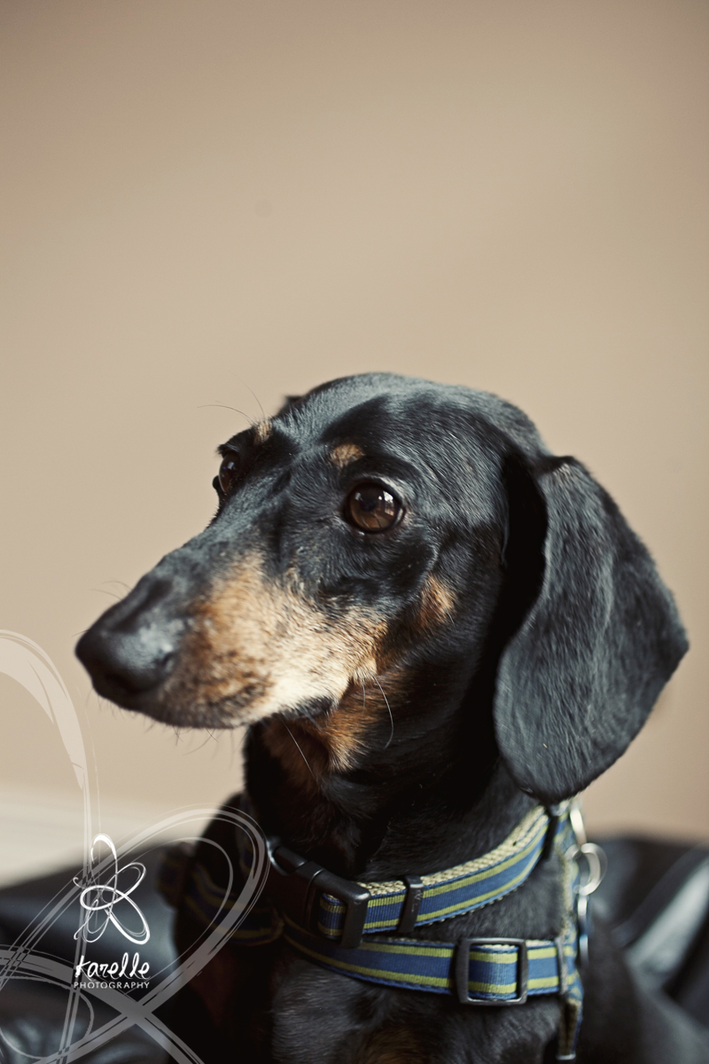 Houston dog photographer Rinker2.jpg